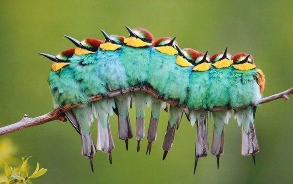 Птички мстят божьим коровкам